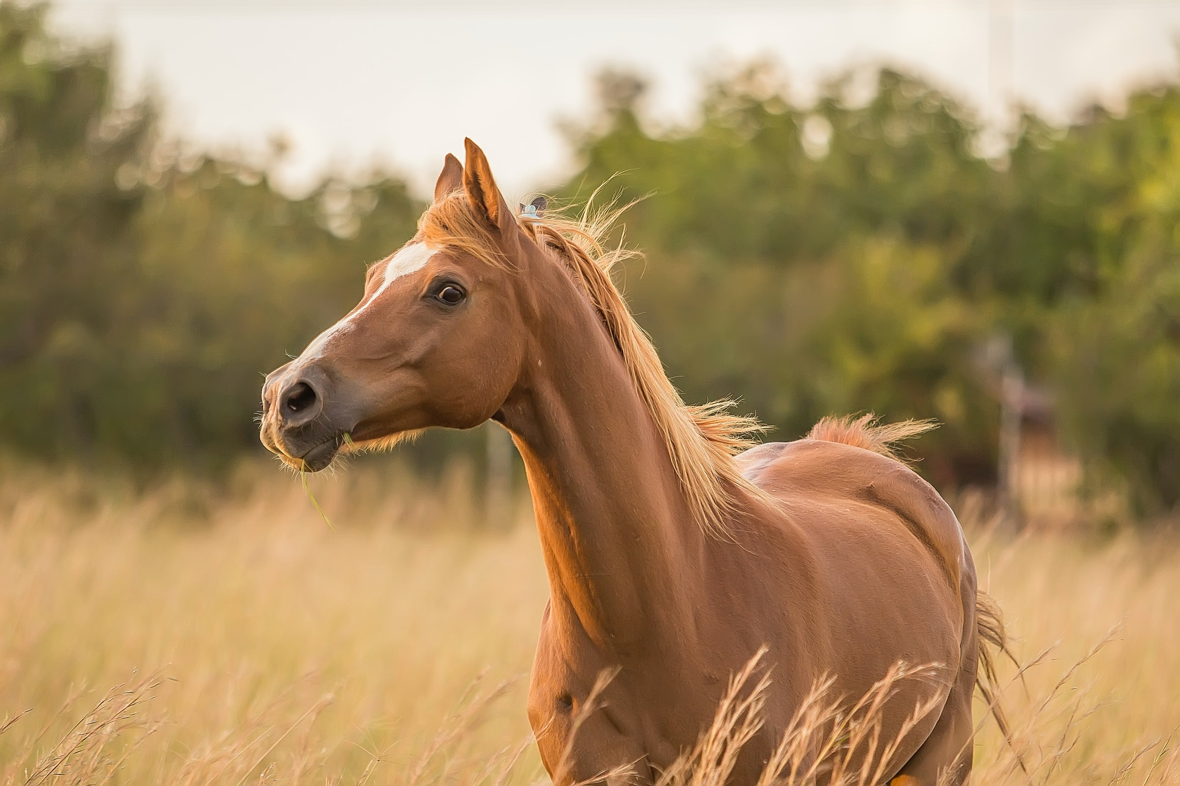 How CBD Can Improve Your Horse's Health